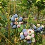 Photo de Berry Best Farm
