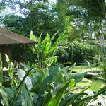 Cabin and landscaping at Hotel Lomas del Volcan