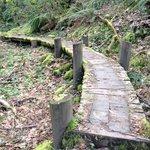 Walking trail around Skamania
