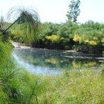 vue du ruisseau et des papyrus du parc à proximité