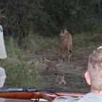 Lion w/ Cubs