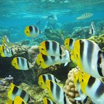 Crystal Clear Snorkeling