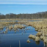 Marshy area of Pokagon State Park