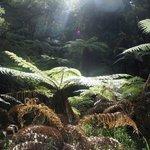 sunlight on the ferns