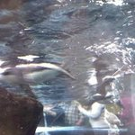 Penguin Swimming Over Me