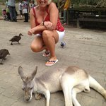 Kangaroo's were lovely