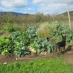 An amazing vegetable patch