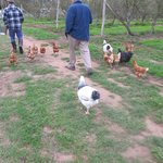 Chickens are very friendly and definately free frange!