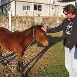 Joel's pony