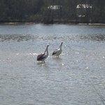 Foto de Lake Conjola Waterfront Holiday Park