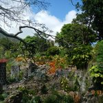 View of Mount Nevis from the walkway trail behind the restaurant.