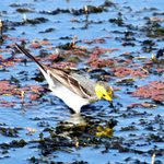 Seasonal wetland bird in Maguri Bill