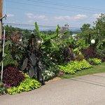 Our unique tropical garden.