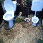 spit and sawdust toilet (Very Clean)