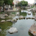 Beautiful Pond behind Restaurants and Shops