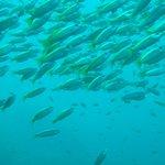 Photo de Sub Aqua Dive Center