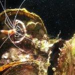 Creepy reef dwellers