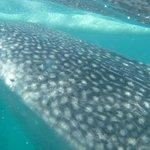 whale sharks at Oslob. You can catch one of the frequent buses to Tan Awan only 30 minutes away.