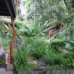 Las habitaciones en medio de la vegetacion