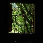 Vista directa a la selva