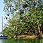 Cotton Tree Dock