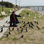 Attentive birds