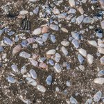 Dozens of Colorful Tiny Clams