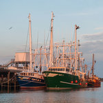 Cape May Fishing Fleet