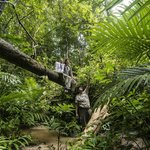 Rainforest Immersion at Pulau Langgun