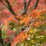永観堂の紅葉は色が華やか