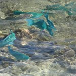 Les poissons bleus depuis la terrasse