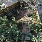 Meera's Courtyard garden - a haven after being out & about