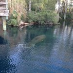 manatee we saw there