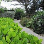 Lush Windsock garden pathway
