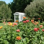Zinnias and the Garden Trellis