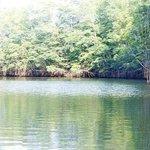 Mangroven-Tour