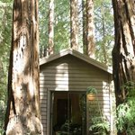 Little Sur Cabin 8