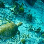 sea turtles and crystal clear water