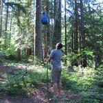 Hanging food on bear pole