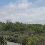 San Elijo preserve