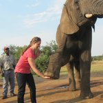 Giving an elephant a high five