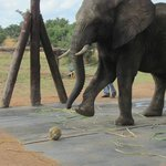 one of the elephants of our interaction