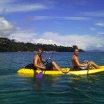 Kayaking near dolphins