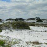 Grayton Beach Dunes