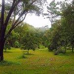 Lancetilla Botanical Garden