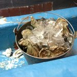 Bucket of Oysters!