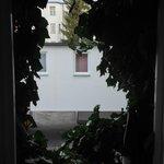 Nice vines surround the bathroom window