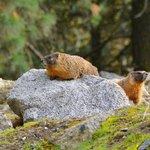 marmots next door