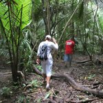 Jungle trail to howler monkeys
