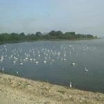 Lake shores where the birds gather